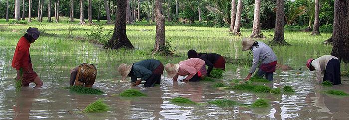 Cambodge-000